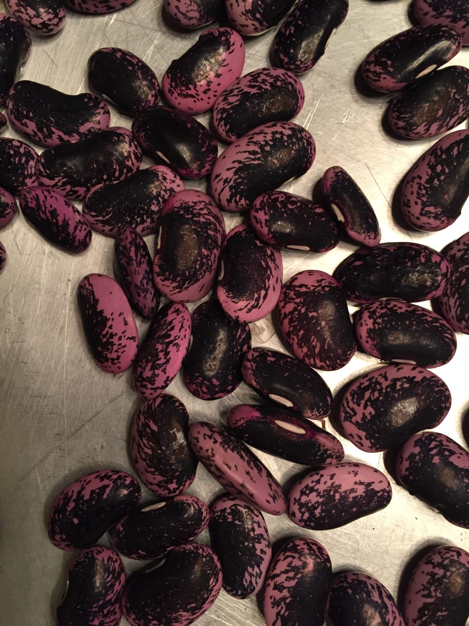 Scarlet Runner Beans – Best Kept Secret Ever!