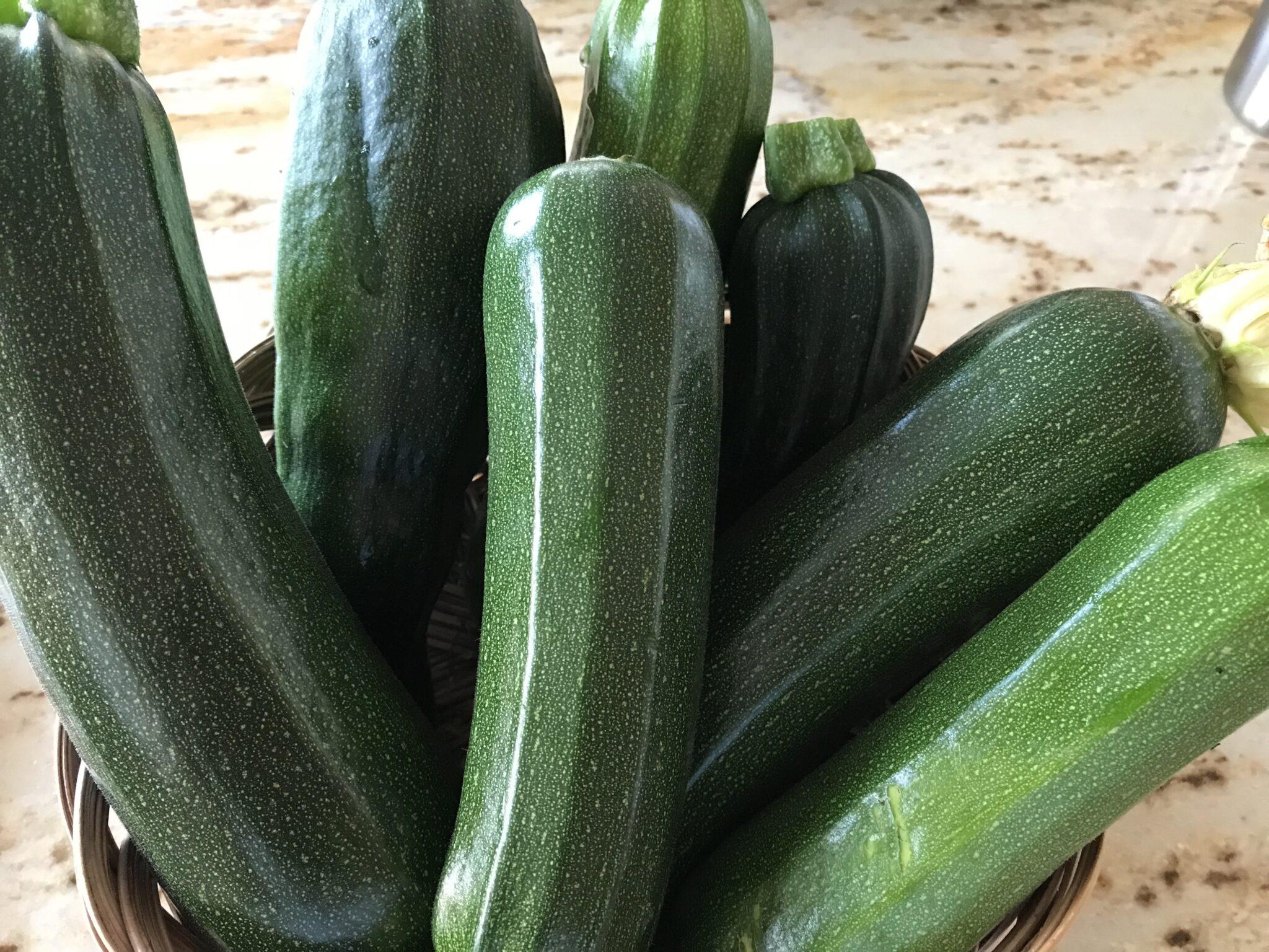 Let The Zucchini Recipes Begin… Again!