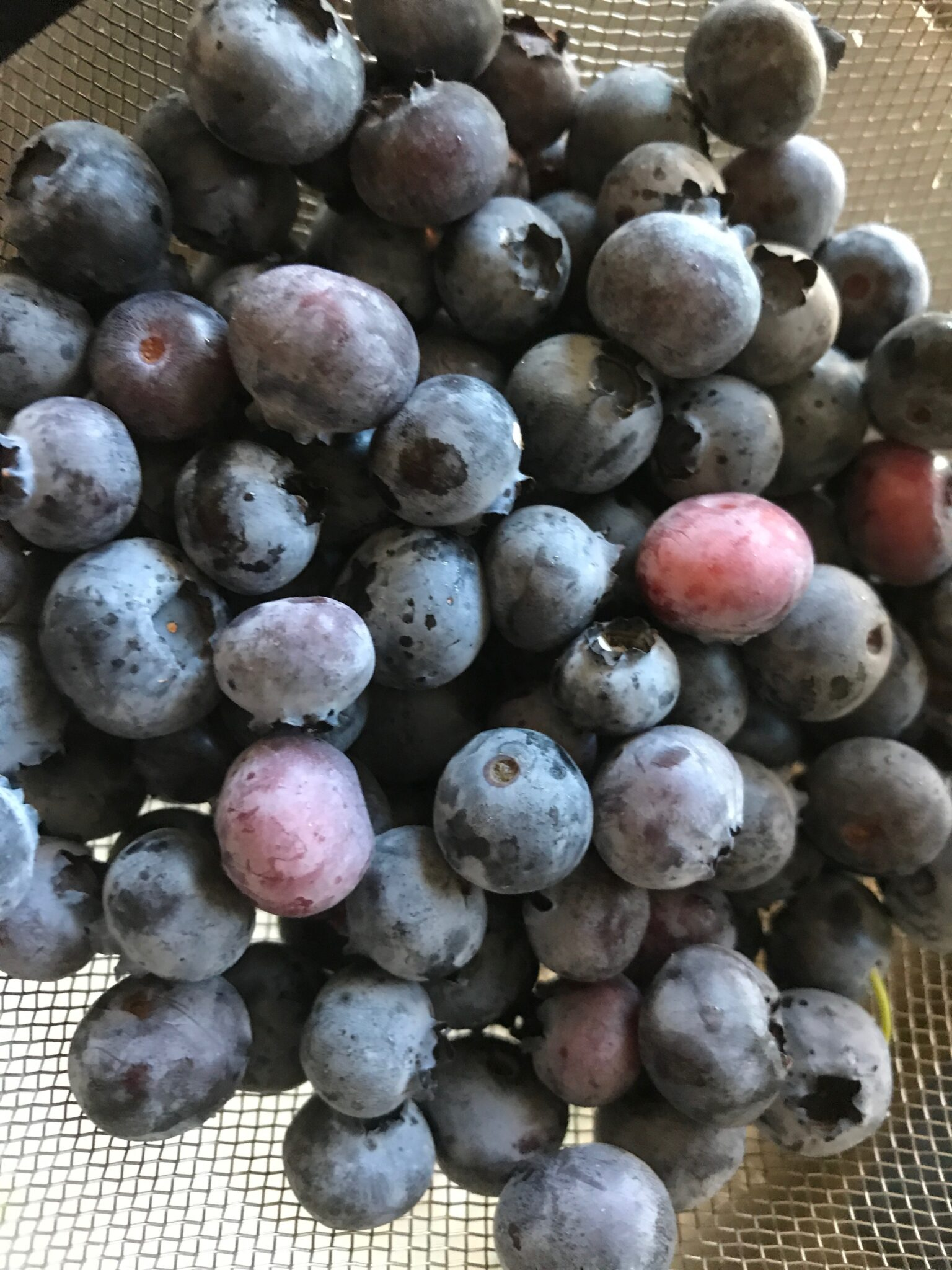 The Berry Bunch, The Berry Bunch – Blueberries